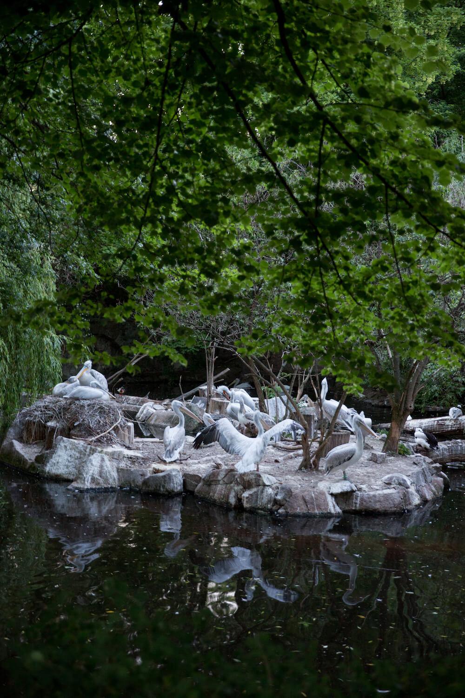 Event Cook & Cross 2019 KPM & Nachts im Zoo Berlin Networks plan A
